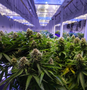 Clearing the Air: PreVent®, Permatron and Cannabis Indoor Grow Rooms